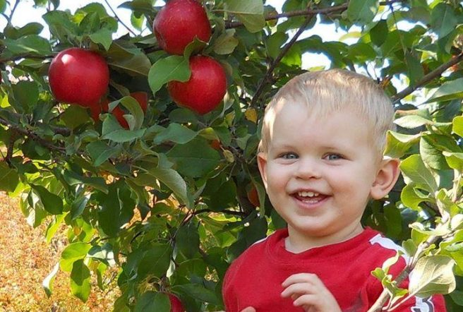 Kid And Apples