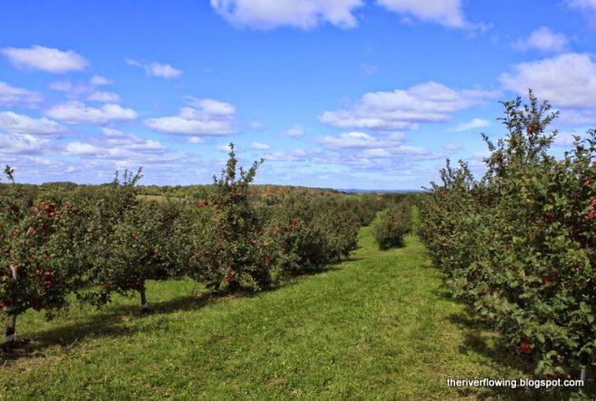 Summer Apple Orchard